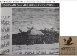 Artikel Gelderlander 8 december 1987 over Roze Pelikaan Meinerswijk, Arnhem, 29 november - 13 december 1987